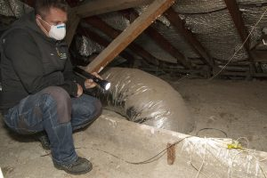 pest-and-building-inspections